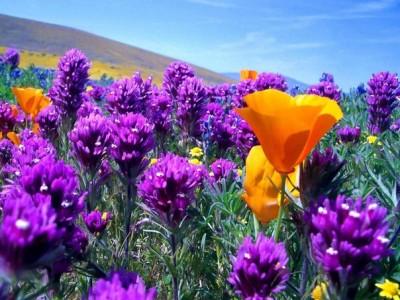 К чему снятся цветы. Сонник цветы