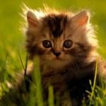 К чему снятся котята. Сонник котята