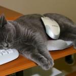 К чему снятся кошки. Сонник кошки