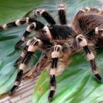 К чему снится паук? Сонник паук