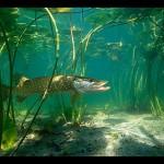 К чему снится рыба? Сонник онлайн рыба