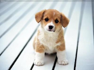 К чему снится носить на руках собаку фото