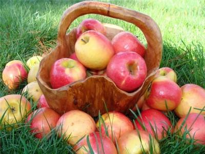 К чему снятся яблоки. Сонник яблоки