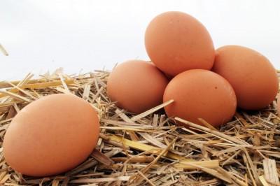 К чему снятся яйца? Сонник Яйца