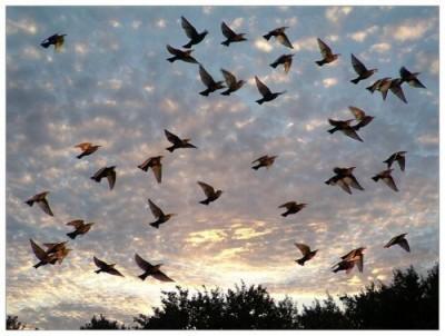 К чему снятся птицы. Сонник птицы