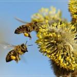 К чему сняться пчелы. Сонник пчелы