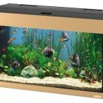 К чему снится аквариум? Сонник Аквариум
