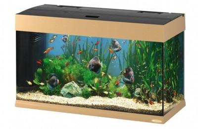 К чему снится аквариум
