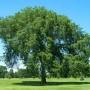 К чему снится дерево? Сонник дерево