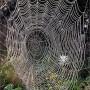 К чему снится паутина? Сонник паутина