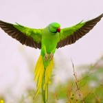 К чему снится попугай? Сонник Попугай