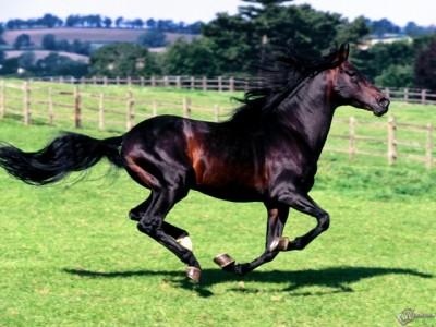 К чему снится конь? Сонник конь