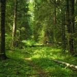 К чему снится лес? Сонник лес
