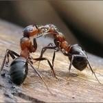 К чему снятся муравьи? Сонник Муравьи