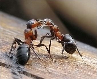 Чему снятся муравьи к на полу