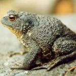 К чему снится жаба? Сонник Жаба