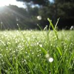 К чему снится трава? Сонник трава