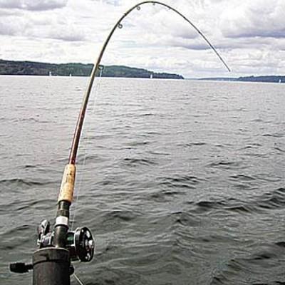 Сонник К Чему Сниться Ловля Рыбы Руками