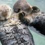 25 фактов о том, как спят животные