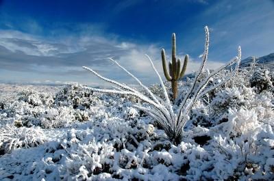 Пустыня зимой