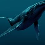 К чему снится кит? Сонник Кит