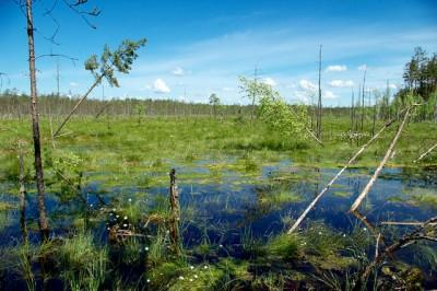 К чему снится болото? Сонник Болото