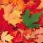 К чему снятся листья? Сонник Листья