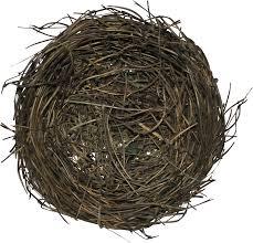 К чему снится гнездо? Сонник Гнездо