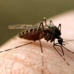 К чему снятся комары? Сонник Комары
