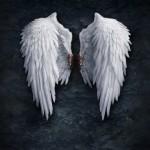 К чему снятся крылья (крыло)? Сонник Крылья (Крыло)