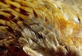 К чему снятся перья? Сонник Перья