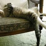 Спать как кошка. Структура сна у кошек
