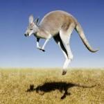 К чему снится кенгуру? Сонник Кенгуру