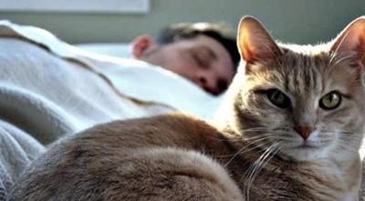 Почему-кот-спит-на-человеке-что-означают-его-позы-и-выбранное-место