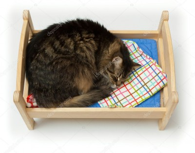 depositphotos_5599076-stock-photo-toy-cradle-and-a-cat