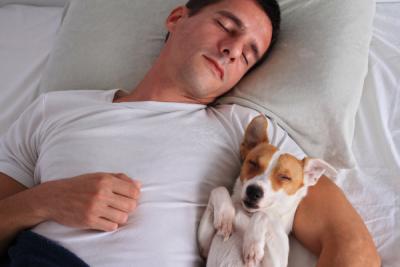 Сон рядом с собакой – да или нет?