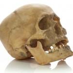 К чему снится череп? Сонник Череп